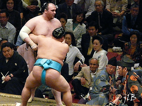 Sumo-20