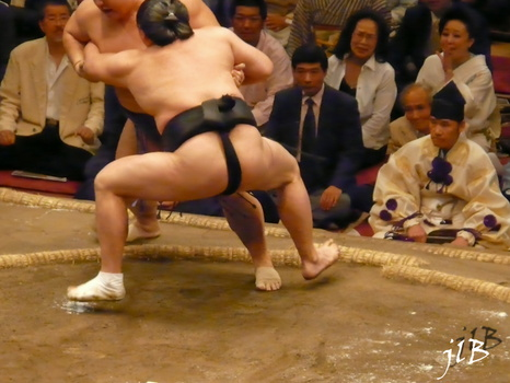 Sumo-49