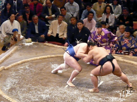 Sumo-7