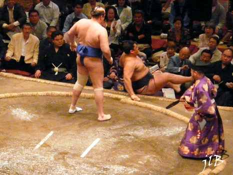Sumo-8