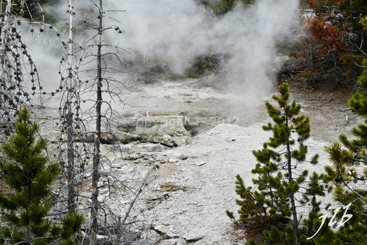 Lower geyser basin-12