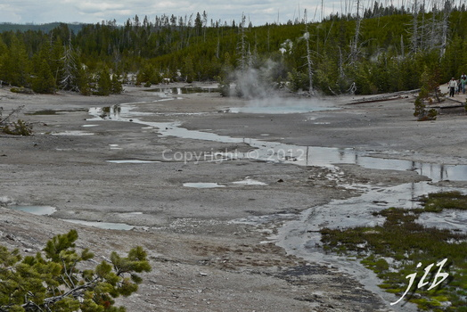 Lower geyser basin-18