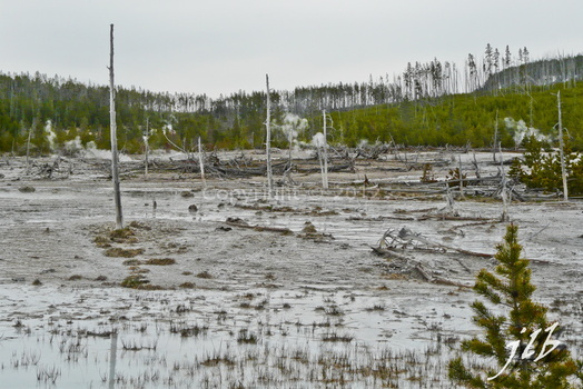 Lower geyser basin-27