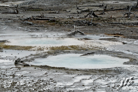 Lower geyser basin-28
