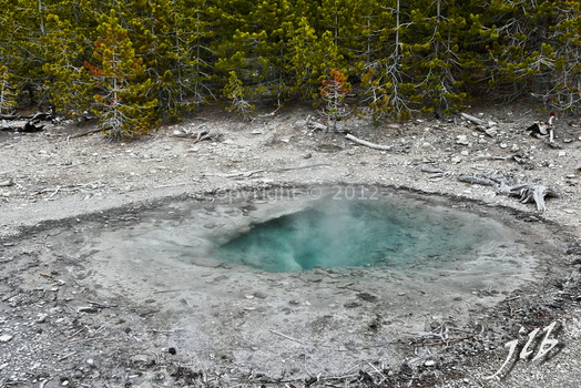 Lower geyser basin-32