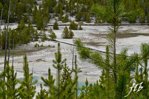 Lower geyser basin-39