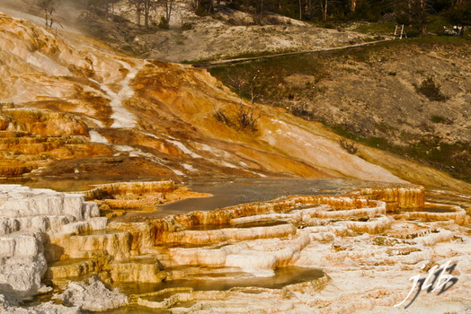 Mammoth hot springs-11