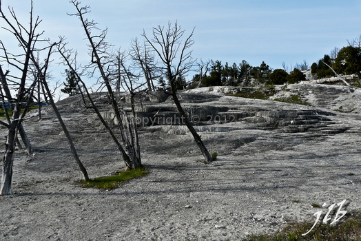 Mammoth hot springs-14