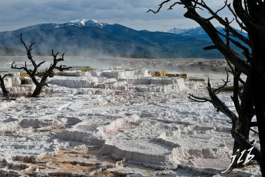 Mammoth hot springs-35