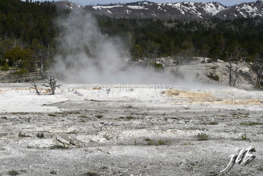 Mammoth hot springs-36