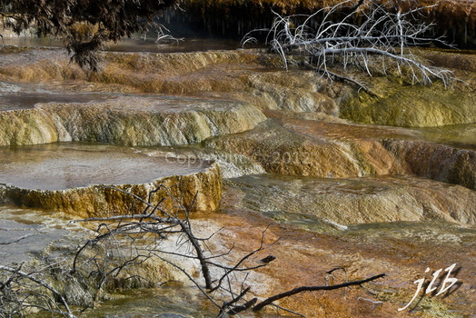 Mammoth hot springs-42