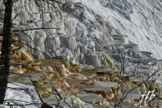 Mammoth hot springs-45