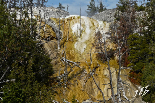 Mammoth hot springs-47