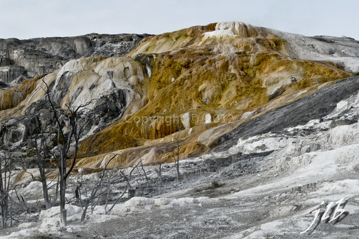 Mammoth hot springs-51