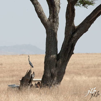 - centre SERENGETI-54