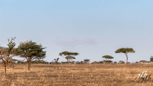 Centre SERENGETI-12