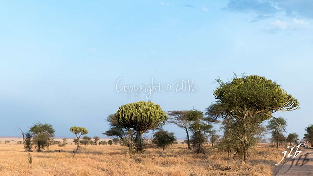 Centre SERENGETI-27