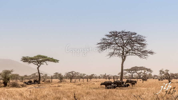 Centre SERENGETI-34