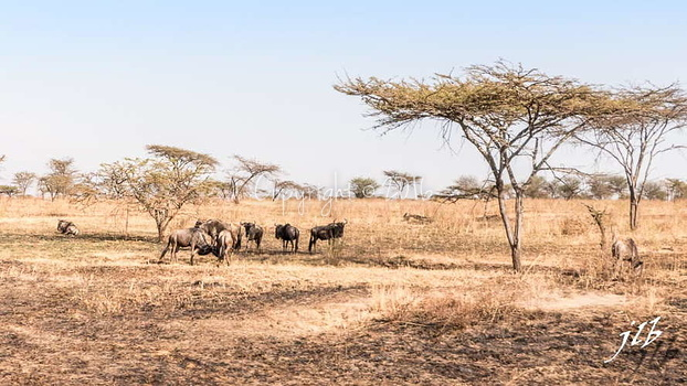 Centre SERENGETI-58
