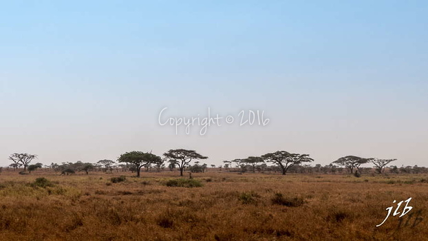 Centre SERENGETI-32