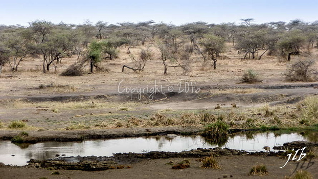 Centre SERENGETI-81