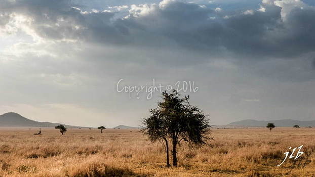 Centre SERENGETI-82