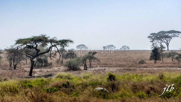 Centre SERENGETI-83