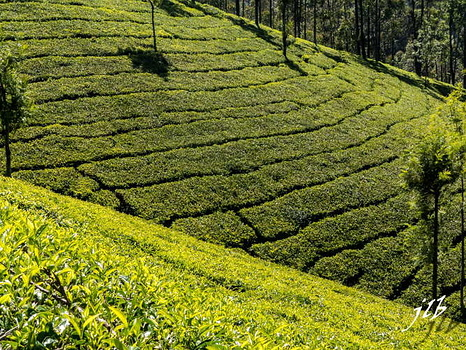 THE VALLEY - MUNNAR-2