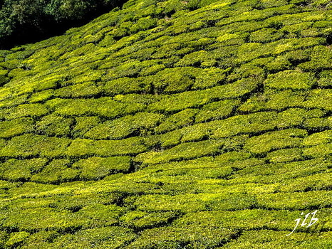 THE VALLEY - MUNNAR-3