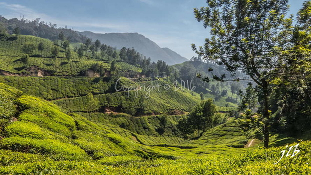 THE VALLEY - MUNNAR-5