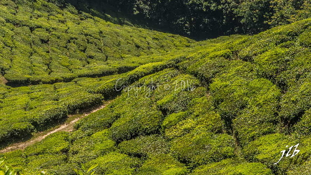 THE VALLEY - MUNNAR-6