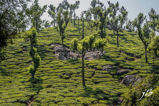 THE VALLEY - MUNNAR-7