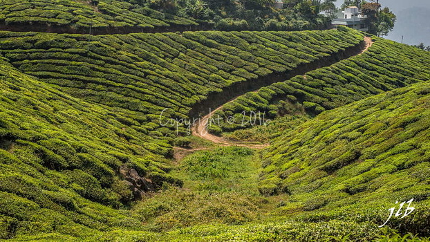 THE VALLEY - MUNNAR-9