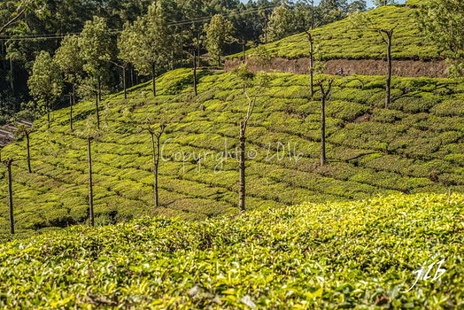 THE VALLEY - MUNNAR-14