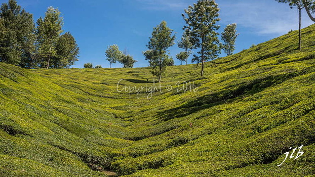 THE VALLEY - MUNNAR-15