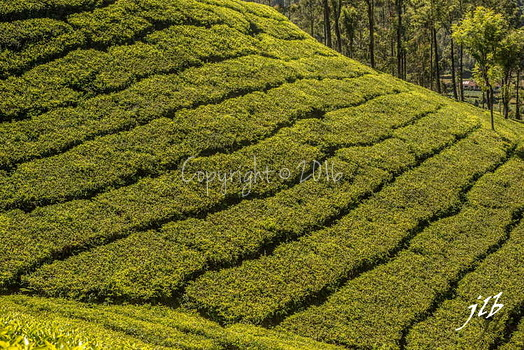 THE VALLEY - MUNNAR-16