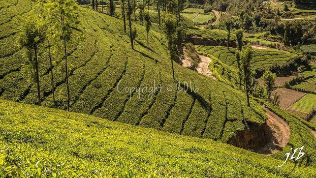 THE VALLEY - MUNNAR-17