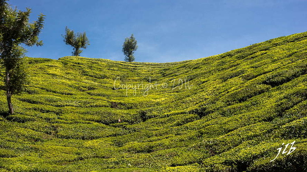THE VALLEY - MUNNAR-19