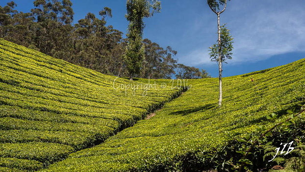 THE VALLEY - MUNNAR-20