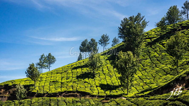 THE VALLEY - MUNNAR-21