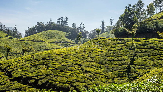 THE VALLEY - MUNNAR-22