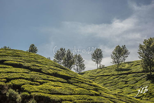 THE VALLEY - MUNNAR-23