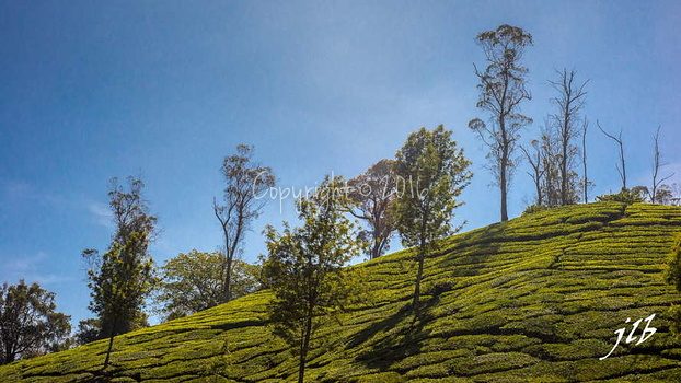 THE VALLEY - MUNNAR-24