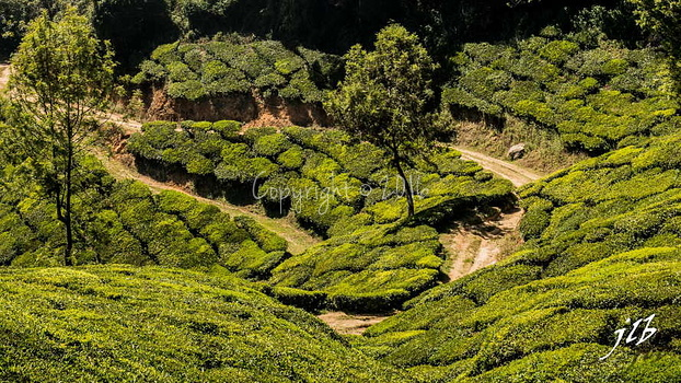 THE VALLEY - MUNNAR-25