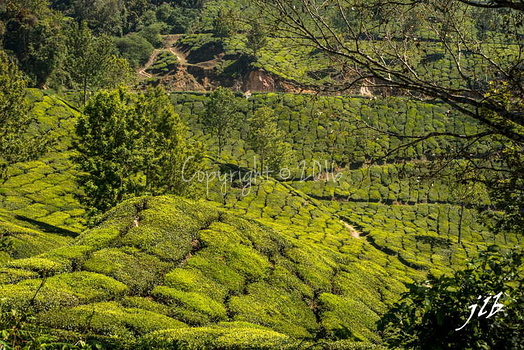 THE VALLEY - MUNNAR-26
