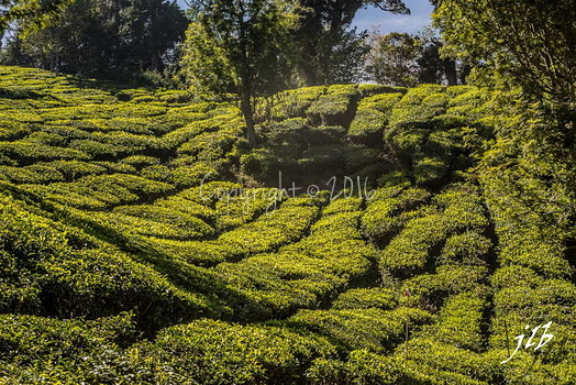 THE VALLEY - MUNNAR-27