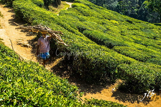 THE VALLEY - MUNNAR-28