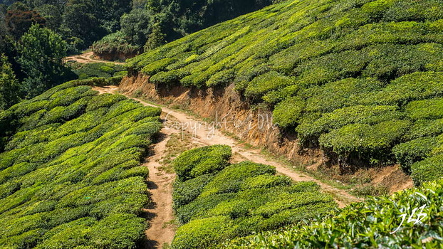 THE VALLEY - MUNNAR-29