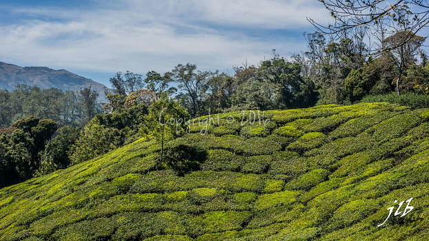THE VALLEY - MUNNAR-30
