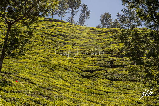 THE VALLEY - MUNNAR-31
